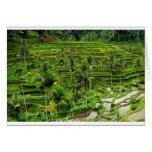 Terraza del arroz en Bali Tarjetón