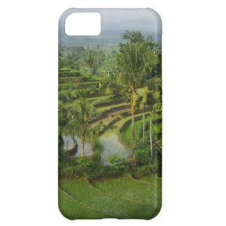 Terraza Ricefield en Bali