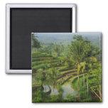 Terraza Ricefield en Bali Imán Cuadrado