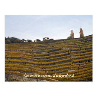 Terrazas de Lavaux Tarjetas Postales