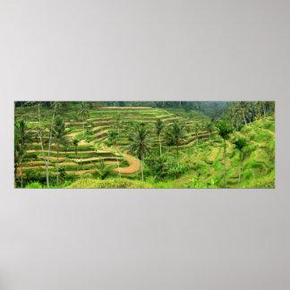 Terrazas del arroz en la impresión del poster de