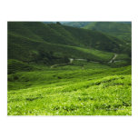 terrazas del arroz tarjeta postal