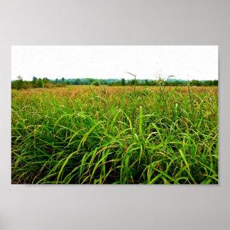 Terreno de aluvión de la cubierta de la hierba de  impresiones
