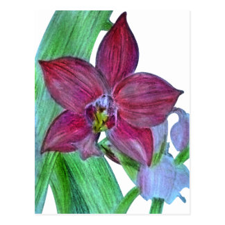 Terrestrial Orchid Postcard