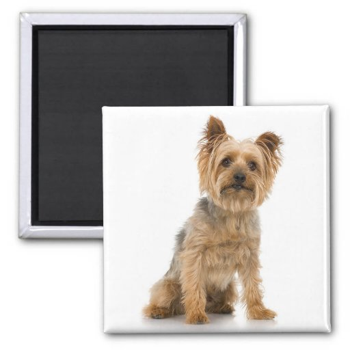 Terrier 2 Inch Square Magnet