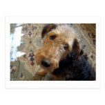 terrier 2.png del airedale postal