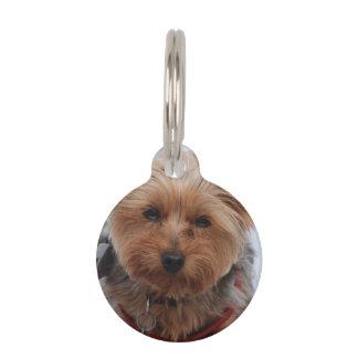 terrier-39 placas para mascotas