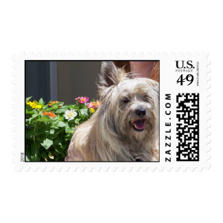 terrier among flowers postage
