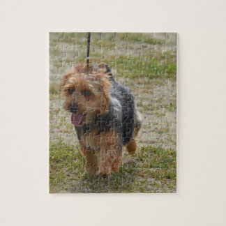 Terrier australiano lindo rompecabezas con fotos