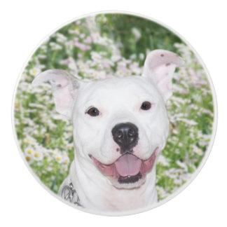 Terrier blanco feliz del pitbull pomo de cerámica