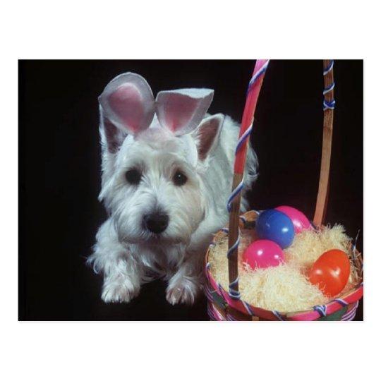 Terrier Bunny - Postcard
