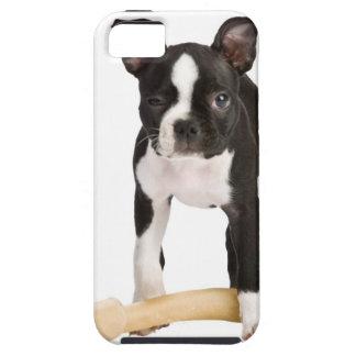 Terrier de Boston que guarda el hueso twisty iPhone 5 Case-Mate Cobertura