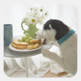 Terrier de Jack Russell. 2 Pegatina Cuadrada