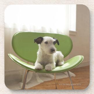Terrier de Jack Russell. 2 Posavaso