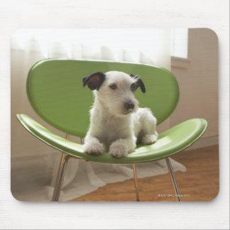 Terrier de Jack Russell. 2 Tapete De Ratón