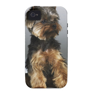 Terrier de Yorkshire primer iPhone 4 Carcasa