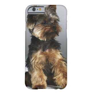 Terrier de Yorkshire, primer Funda Para iPhone 6 Barely There