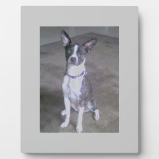 Terrier Dog Display Plaques