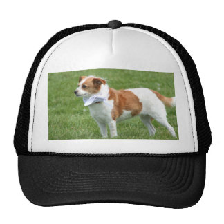 Terrier dog trucker hat