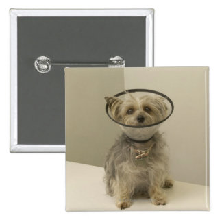 Terrier dog wearing protective collar, close-up 2 inch square button