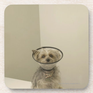 Terrier dog wearing protective collar, close-up drink coaster