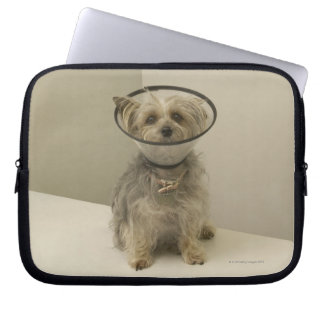 Terrier dog wearing protective collar, close-up laptop sleeve