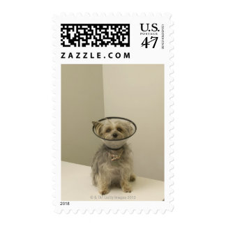 Terrier dog wearing protective collar, close-up postage