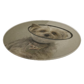 Terrier dog wearing protective collar cutting board