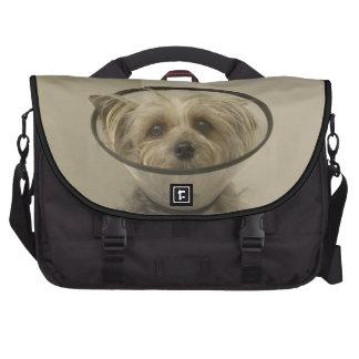Terrier dog wearing protective collar laptop bag