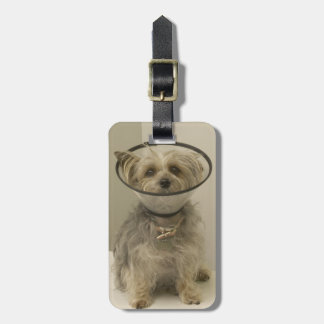 Terrier dog wearing protective collar luggage tag