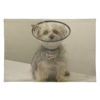 Terrier dog wearing protective collar placemat
