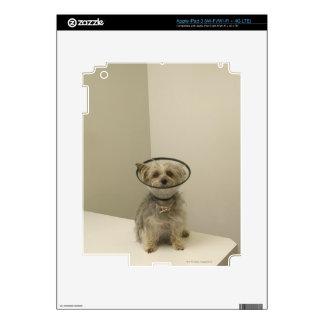 Terrier dog wearing protective collar iPad 3 skin