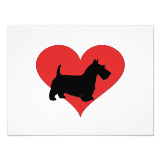 terrier escocés con un corazón rojo grande fotografía