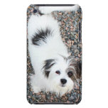 Terrier iPod Case-Mate Protectores