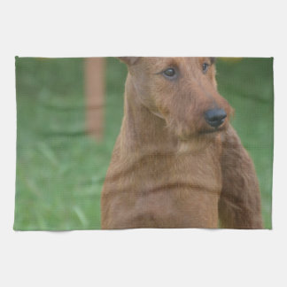 Terrier irlandés lindo toalla