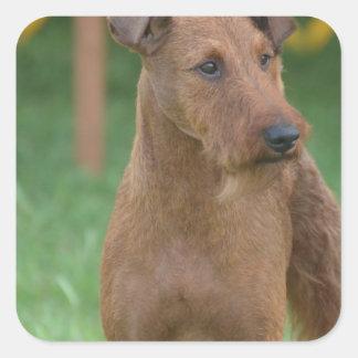 Terrier irlandés lindo etiquetas