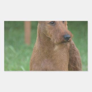 Terrier irlandés lindo pegatina