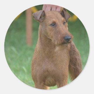 Terrier irlandés lindo etiqueta redonda