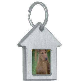 Terrier irlandés lindo placa de nombre de mascota