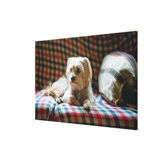 Terrier lying on checkered blanket canvas print