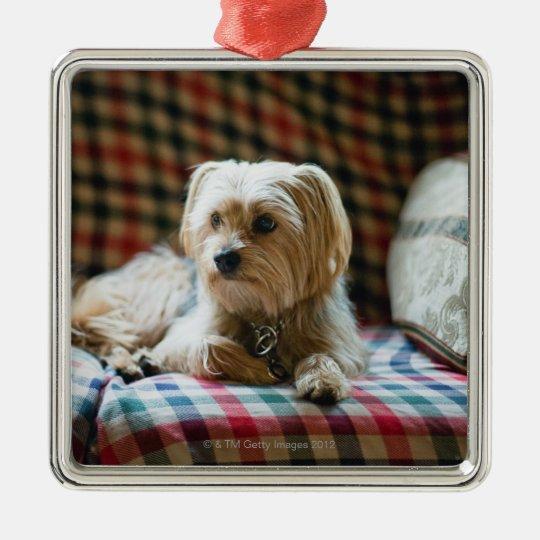 Terrier lying on checkered blanket metal ornament