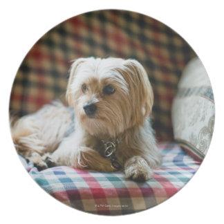Terrier lying on checkered blanket plate