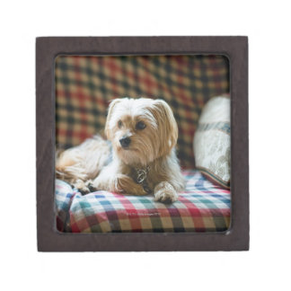 Terrier lying on checkered blanket premium trinket boxes