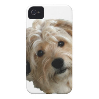TERRIER MIX iPhone 4 Case-Mate CASES