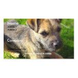 Terrier Puppy Business Card