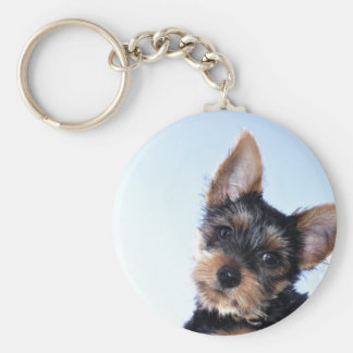 Terrier puppy keychain