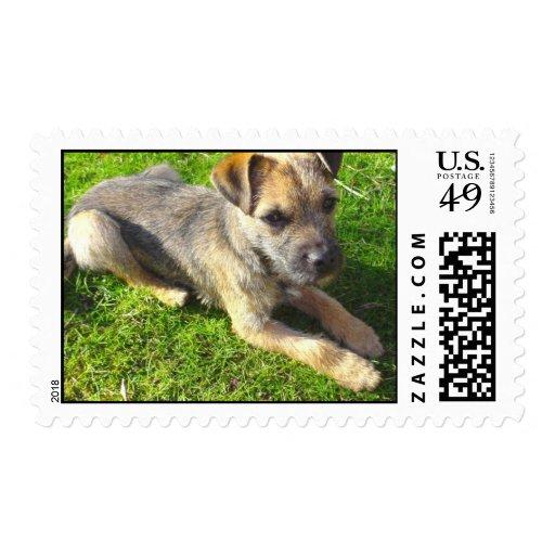 Terrier Puppy Postage Stamp