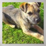 Terrier Puppy Print