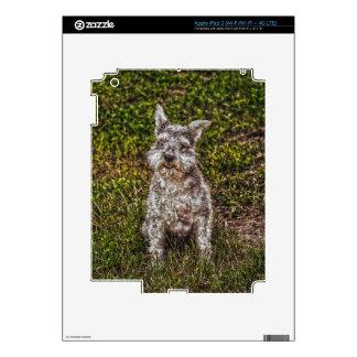 Terrier Schnauzer Pet Dog-lover's Dog Breed iPad 3 Skin