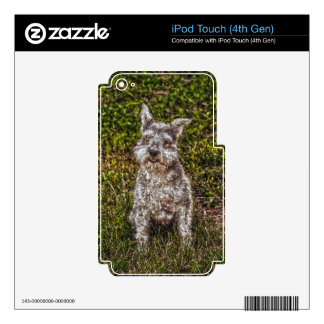 Terrier Schnauzer Pet Dog-lover's Dog Breed iPod Touch 4G Decal